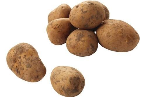 Nicola aardappelen